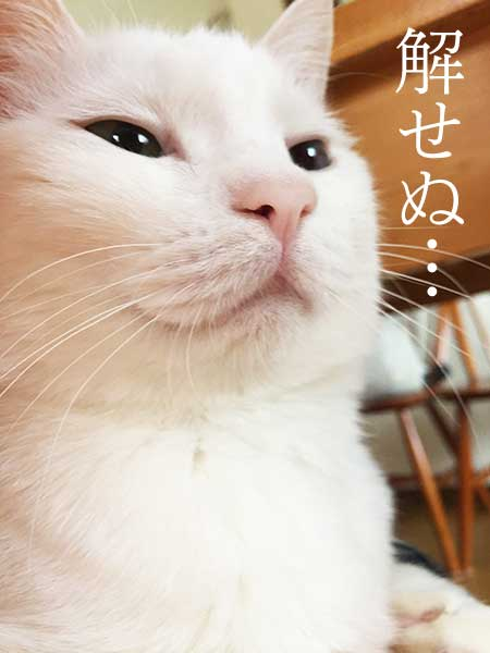 530shiro_4
