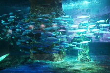 Aqua9