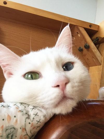 28shiro